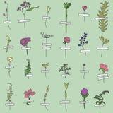 Wall of Herbarium Hand Drawn Seamless Pattern on Green stock illustration
