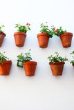 Wall with flowerpots Royalty Free Stock Image