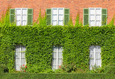 Wall House in the ivy. Royalty Free Stock Image