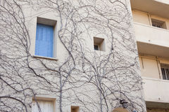 Wall of house overgrown branches of a dry tree Stock Photography