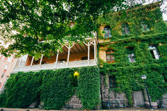 Wall Of House With Window Covered With Ivy Stock Images