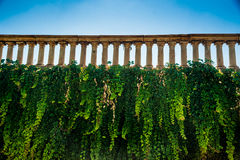 Wall with ivi and weathered historic balustrade Royalty Free Stock Image