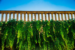 Wall with ivi and weathered historic balustrade Royalty Free Stock Photo