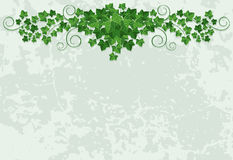 Wall with ivy. Grunge wall with ivy,  background Royalty Free Stock Photography
