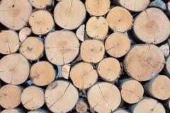 Wall large Eucalyptus wood circle Stock Photos