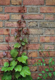 Wall and Leaf Stock Photo