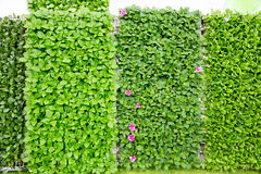 Wall with leafs Stock Photos