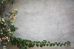 Wall with leaves Stock Image