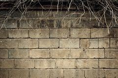 Wall of light brick and bare branches sticking up from above royalty free stock photography