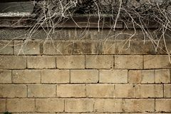 Wall of light brick and bare branches sticking up from above royalty free stock photos