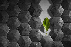 A wall lined with old black cracked tiles in the form of cells, in the middle of a green leaf Stock Photo