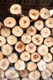 Wall of Logs at Sawmill Stock Photography