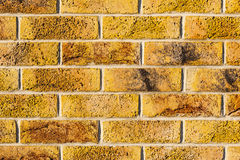 Wall made ​​of bricks. Stock Images