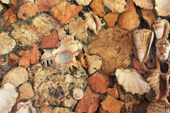 Wall made of stones and sea shells. Stock Photo