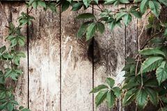 A wall made of wrought wood with wattle leaves. Stock Images