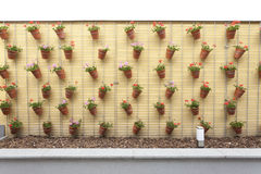 Wall with meny flowerpot Royalty Free Stock Photo