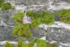 Wall with moss Stock Photos