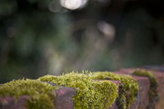 Wall and moss background Royalty Free Stock Images