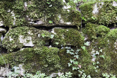 Wall with moss Stock Image
