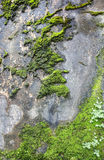 Wall with moss Stock Photography