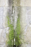 Wall with moss Royalty Free Stock Image