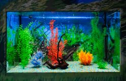 Wall mounted aquarium with tropical fish. And algae royalty free stock photography