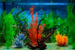 Wall mounted aquarium with tropical fish. And algae royalty free stock images