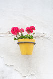 Wall mounted flower pot. Royalty Free Stock Images