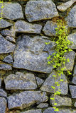 Wall of natural stone and sprouted grass Royalty Free Stock Image