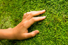 Wall of nature. And woman`s hand Stock Photo