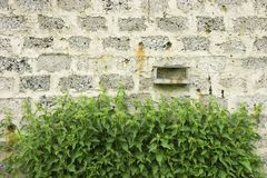 Wall and nettle Stock Photos