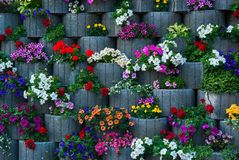 Wall Of Flowers Royalty Free Stock Photos