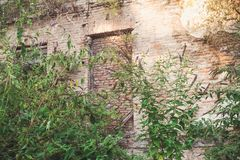 The wall of an old house overgrown with bushes. royalty free stock photography