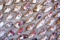 Wall with oyster shells Stock Image
