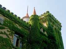 Wall of palace. Wall with ivy of palace Stock Photos