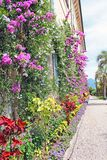 The wall of the Palace entwined with beautiful summer flowers royalty free stock photo