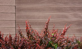 Wall from panels with red bush Royalty Free Stock Images