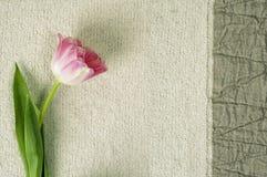 Wall-paper com um tulip Fotos de Stock