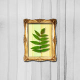 Wall Photo Frame Stock Photography