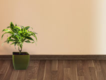 Wall and plant Stock Photos