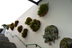 Wall Plants Decoration Stock Photos