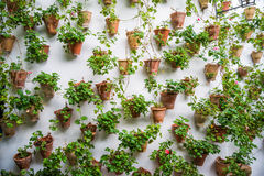 Wall pots in Cordoba Stock Image