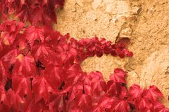 The Wall with the red flowers. Wall with the red flowers Stock Image