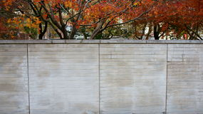 Wall and red leafs. White brick wall and red leafs looks very beautiful Royalty Free Stock Image