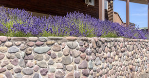 Wall of rocks with lavender Oregon. Stock Photo
