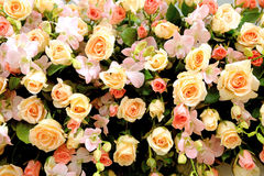 A wall of roses background Royalty Free Stock Images