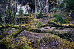 Wall Ruins And Moss Stock Images