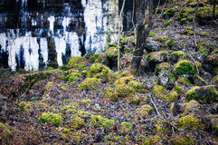 Wall ruins and moss on stones Royalty Free Stock Images