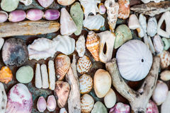Wall of seashell Stock Photos