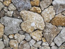 Wall from a shell rock Stock Image